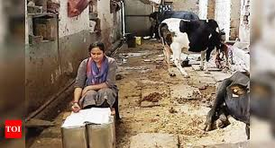 A milkman's daughter from Rajashthan is all set to become a judge